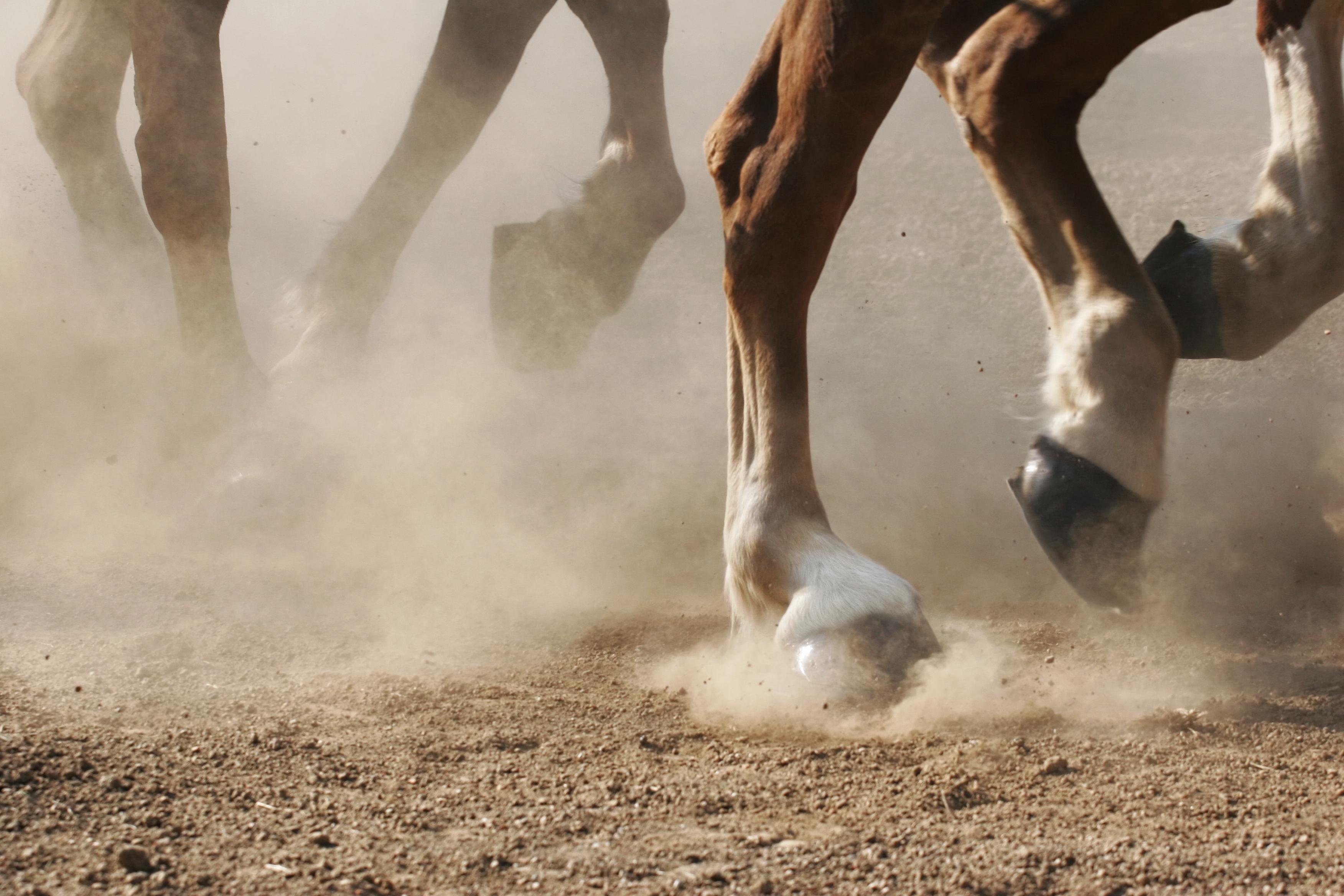 meet caballo singles Si es emocionante pasear al lomo de un caballo,que mejor que hacerlo con  amigos que tengan la misma aficion si te gustan los caballos y.